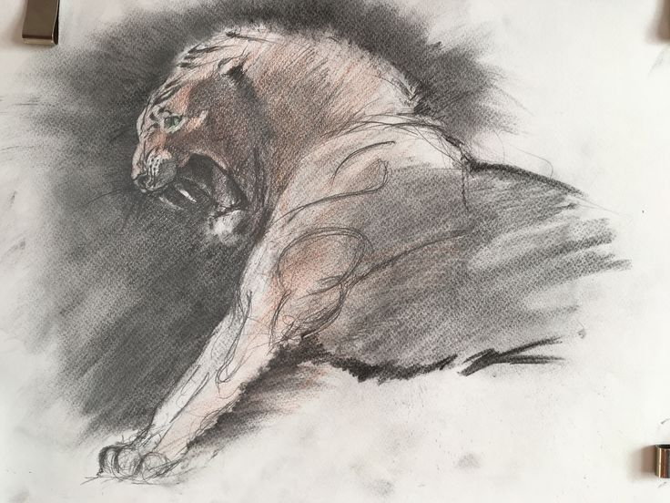 Homotherium. Colored pencil, charcoal.