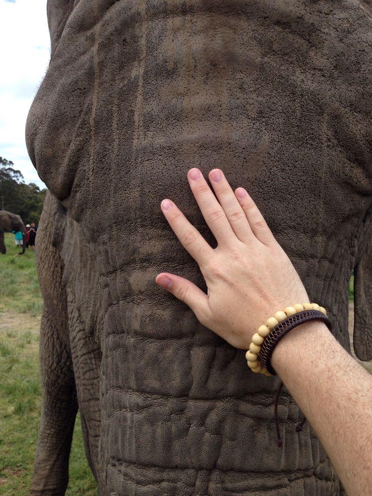 Knysna Elephant Park, Knysna, Western Cape, South Africa