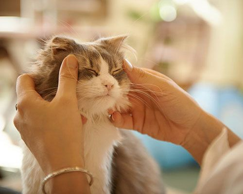 Signs that your pet owns you