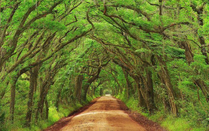La naturaleza siempre se abre camino, nos sorprende con su carácter caprichoso y mágico. De pronto unos árboles empiezan a entrelazarse y con el paso del tiempo crean increí