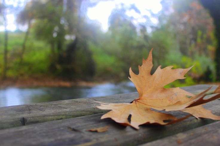 autumn leaf -- photo by Evi Tselempi