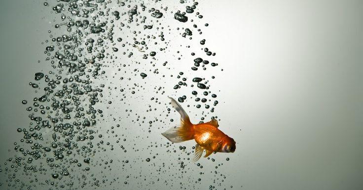 Signos compatíveis com Peixes. Peixes é o 12º e último signo do zodíaco. Simbolizado por um par de peixes entrelaçados, o signo representa morte, renascimento e transformação. Os indivíduos nascidos sob ele são altamente sensíveis, flexíveis, adaptáveis, e podem ser muito altruístas. Para eles, é importante fazer mudanças positivas no mundo, de tal modo que frequentemente ...