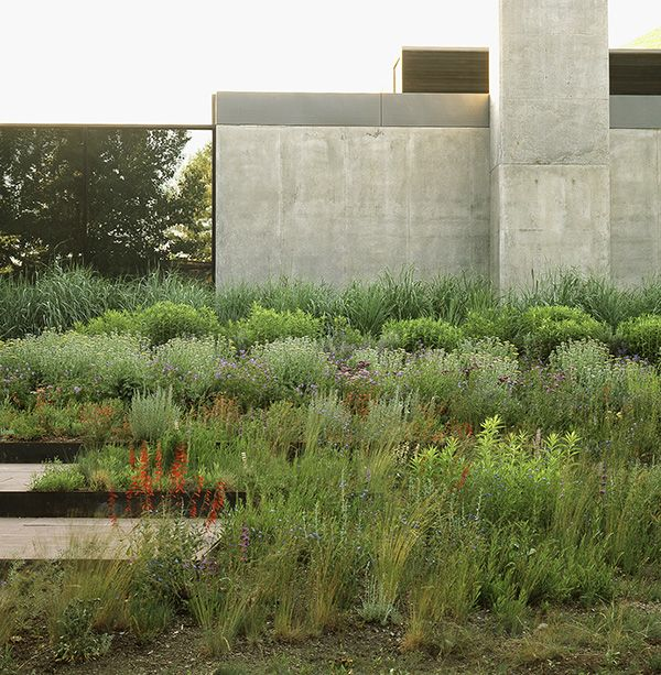 continue terrace theme beyond the main grass terrace but with more wild native plants? core ten edging
