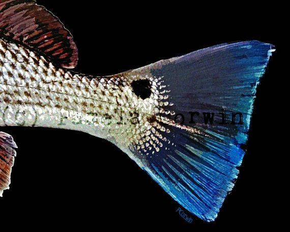 1000 images about abstract fish art on pinterest oil on for Blue bass fish