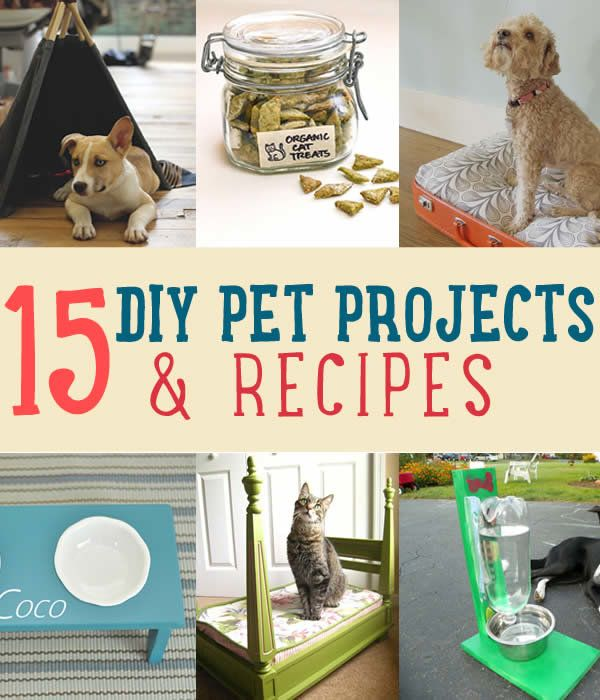 Cool DIY pet projects including homemade dog treats, cat treats, and instructions for a pet bed. Learn how to make cool DIY toys and recipes for your pet!