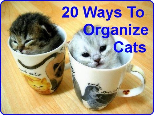 20 Brilliant Ways To Organize Your Cats ... see more at PetsLady.com ... The FUN site for Animal Lovers