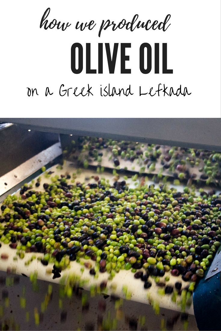Olive harvest and pressing olive oil on a small Greek island of Lefkada where we were volunteers.