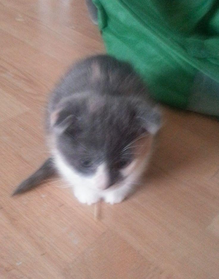 cat in litterbox