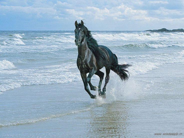 Cavallo!