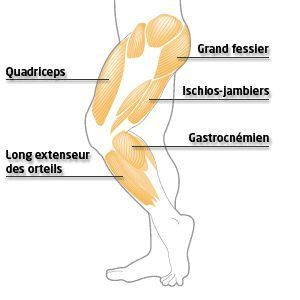 Effective Hip Flexor Stretch: Exercices d'étirement des jambes