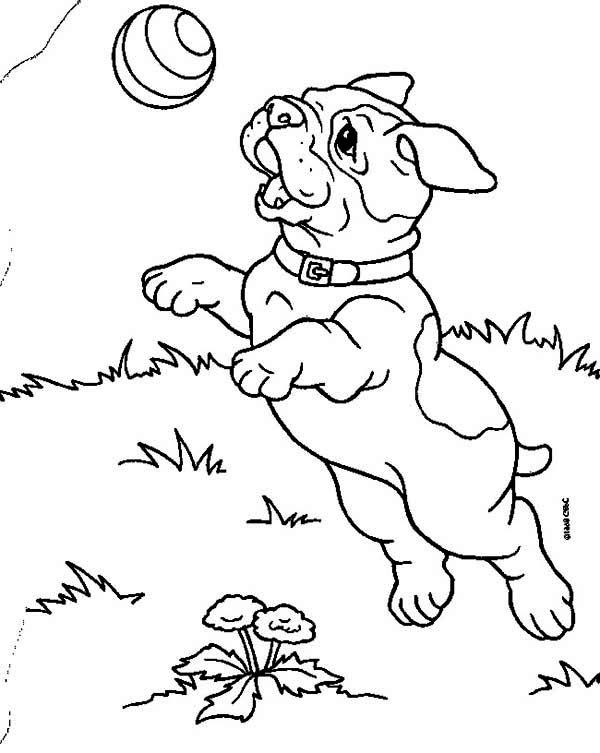 Bulldog Puppy Catching A Ball Coloring Page