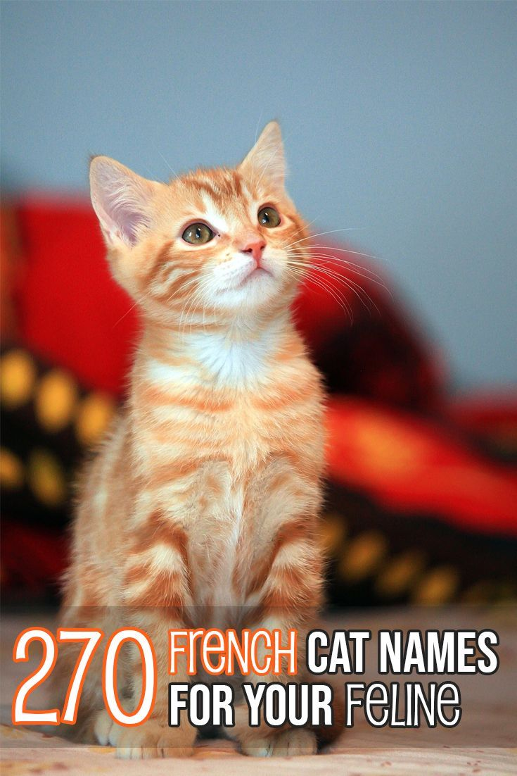 Huge List Of French Cat Names For Your Feline Cat Names French Cats Cute Cat Names