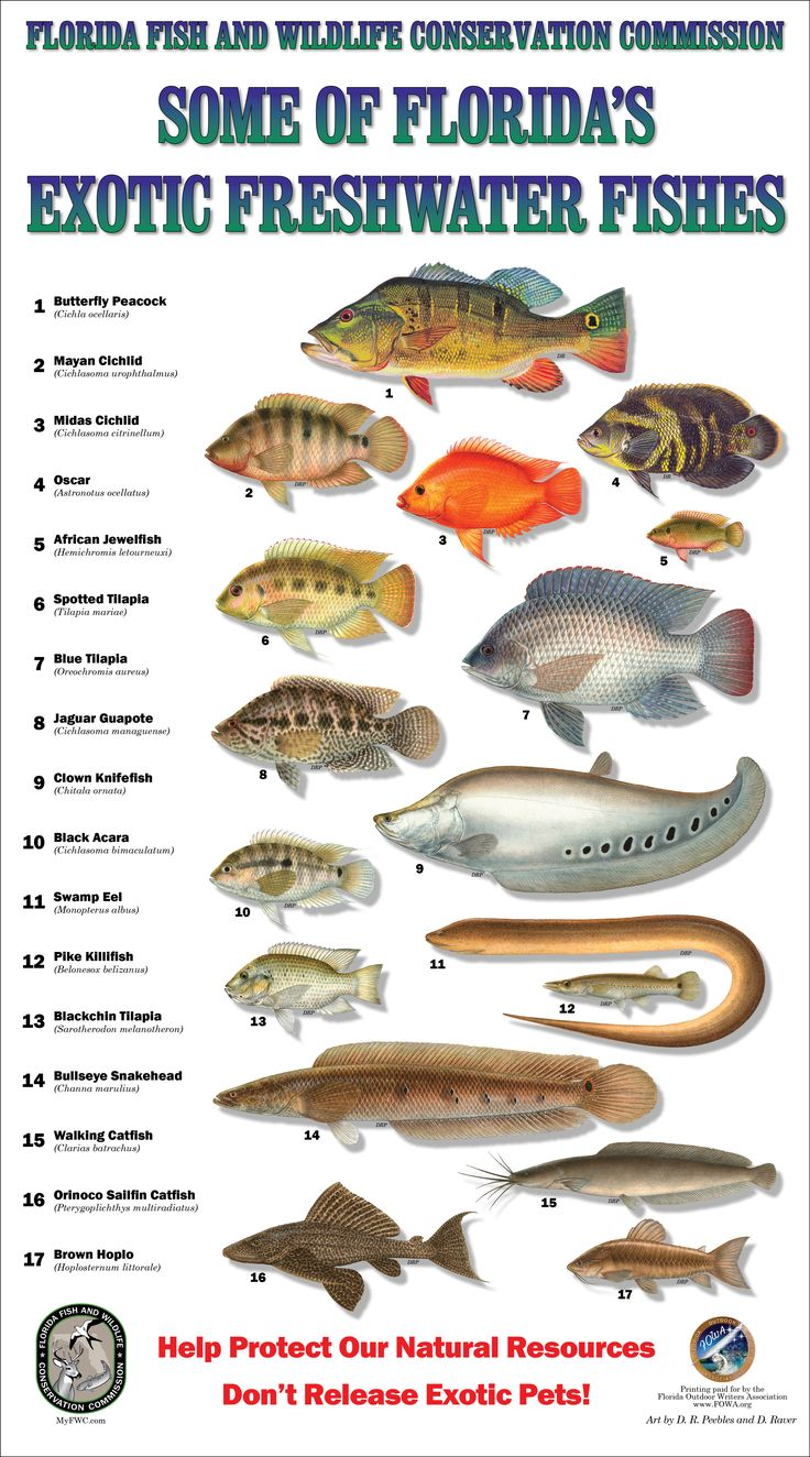 Freshwater fish chart florida warmwater game fish for Florida saltwater fish species