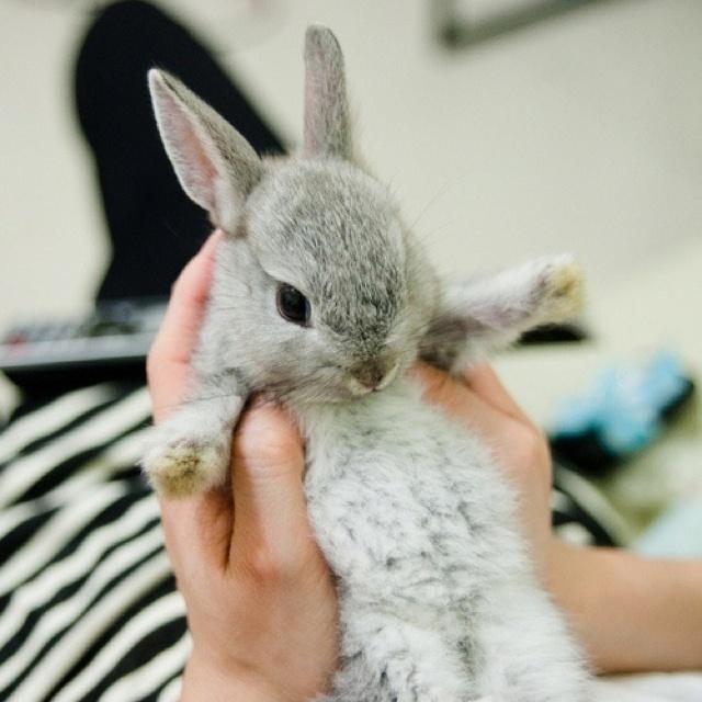 fluffy baby bunny - photo #18
