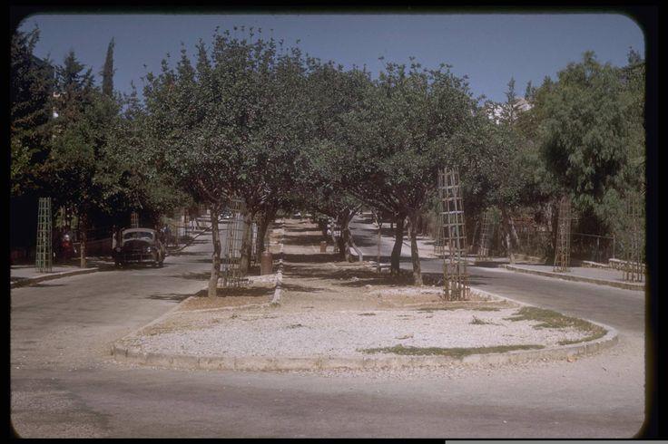 שדרות בן מימון Ben Maimon Boulevard in Jerusalem's Rehavia neighbourhood. July, 1950, Katcoff collection.
