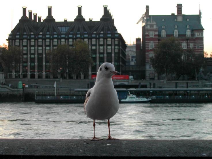 Seagull, London, UK, November 2003