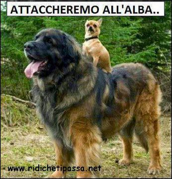 Attaccheremo all'alba..