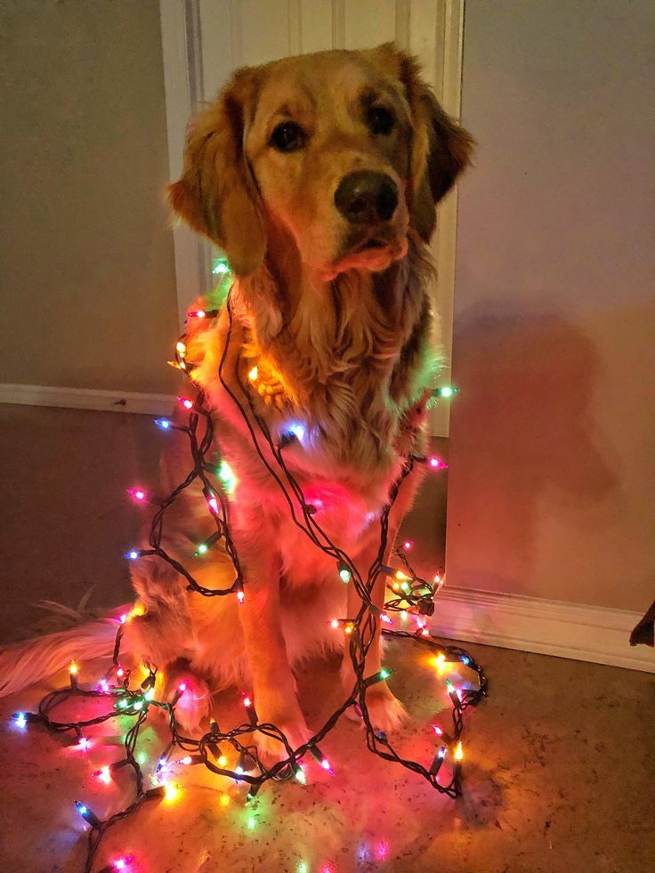 Be A Light In This World Dog Christmas Pictures Christmas Dog