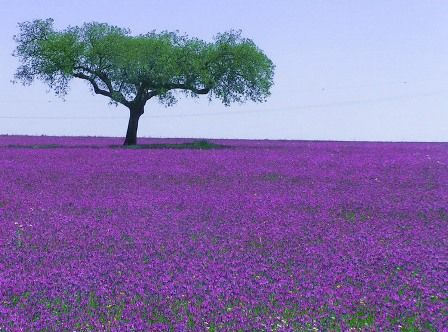 Alentejo, Portugal in the Spring