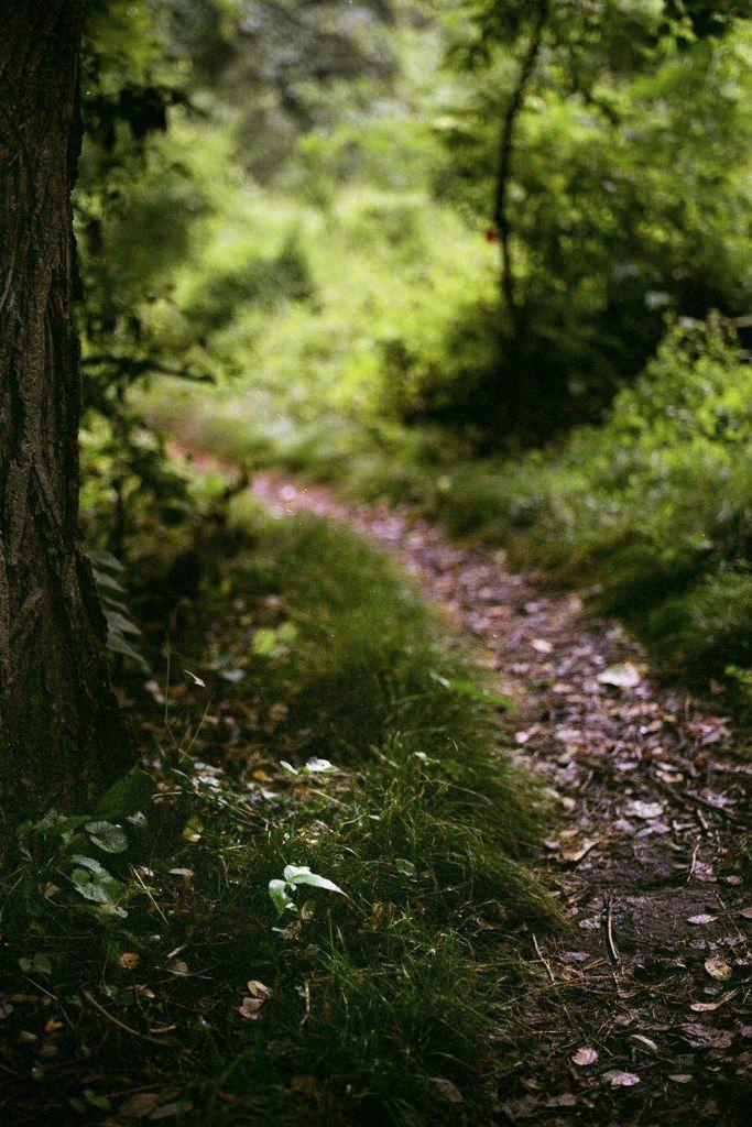 Квиллинг пасхой, картинки красивые человек и тропа в лес