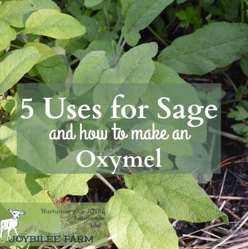 Sage is the classic herb for turkey stuffing, as well as pork sausages, and herbed bread. It is a carminative, aiding in the digestion of…