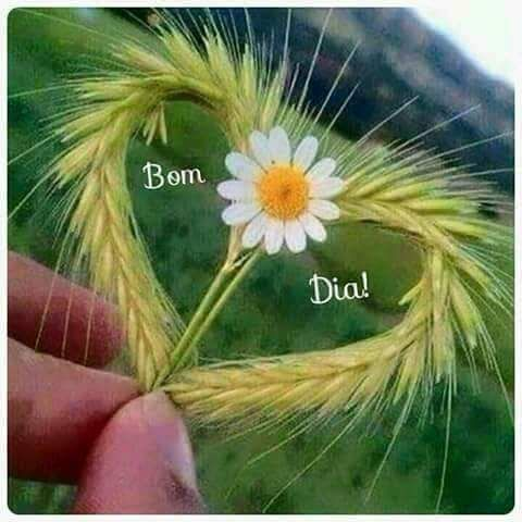 17 Best Images About Bon Dia Bona Tarda Bona Nit On