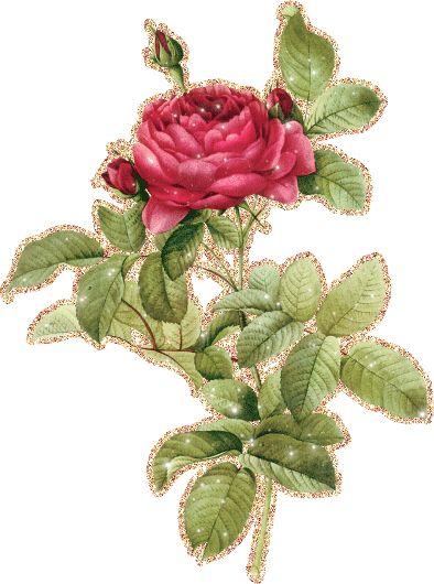 Картинки анимация цветы на прозрачном фоне