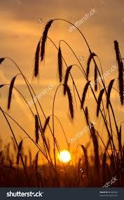 Image result for sun rises in the morning