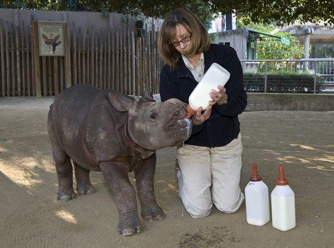Rhino babyZoos Animal, Zoos Safari, Wild Animal Parks, San Diego Zoos, Endangered Animal, Zoology Major, Animal Bytes, Adorable Baby, Safari Parks