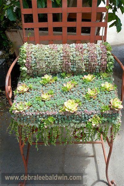 Succulent draped vintage lawn chair garden pinterest gardens plants and garden ideas - Succulent container gardens debra lee baldwin ...