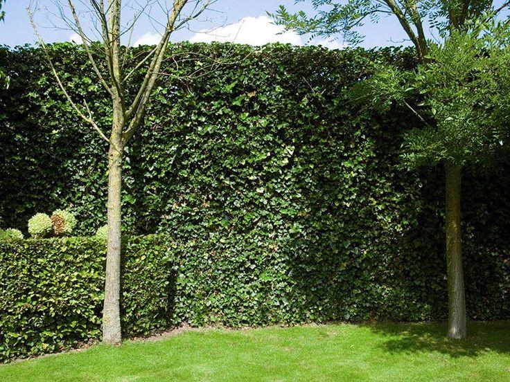 25 beste idee n over tuin afscheiding op pinterest omheining tuin hekken en moestuin hekken. Black Bedroom Furniture Sets. Home Design Ideas