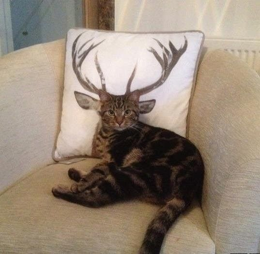 How Deer You Disturb the Cat