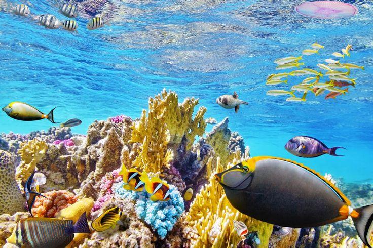 Barrera de coral Australia :http://leapingtoaustralia.com/barrera-de-coral-australia/