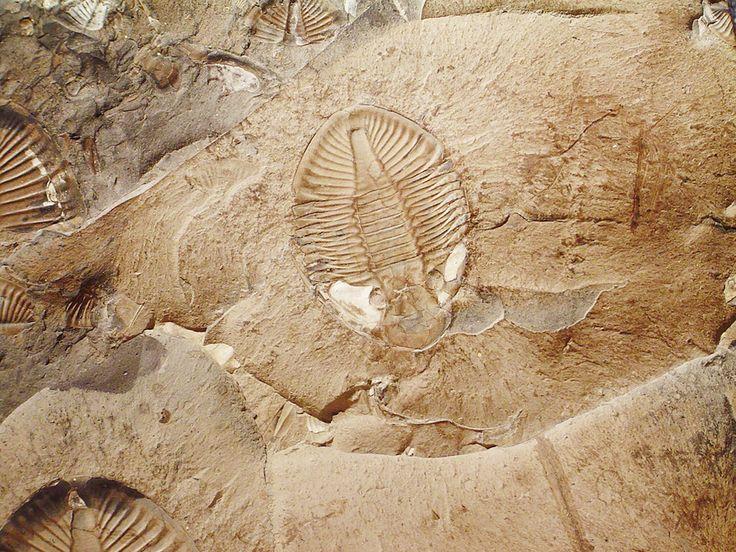 Fósseis, o Passado de Nosso Planeta Escrito nas Rochas   Fabio Haubert