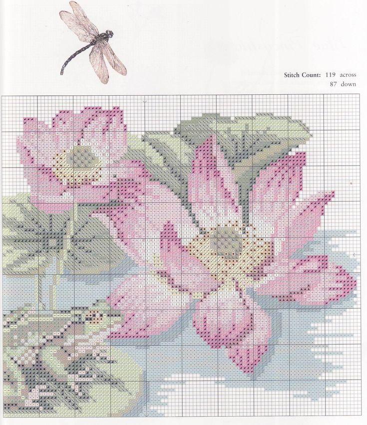 Lotus Waterlily C