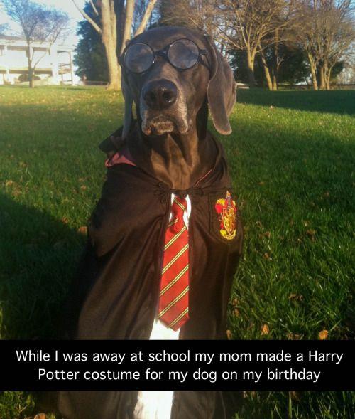 Humor Train - Funny Pictures - via