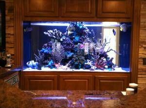 Giant Aquariums: 300 GALLON SALT WATER AQUARIUM - $3000
