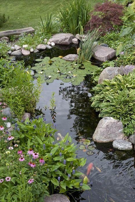 Plants Naturalize the Edges of a Pond Backyard ponds Pinterest
