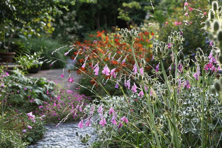 lovely path and planting - Dan Pearson's own garden silvers, and pinks and seed heads...