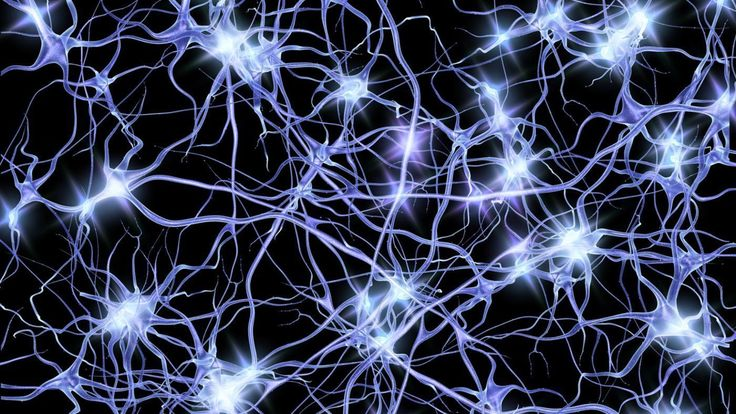 How do neurons transmit electrical impulses? | Reference.com