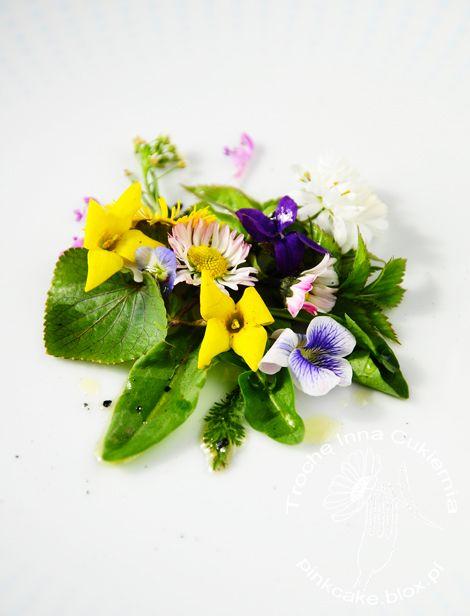 jadalne dzikie rośliny