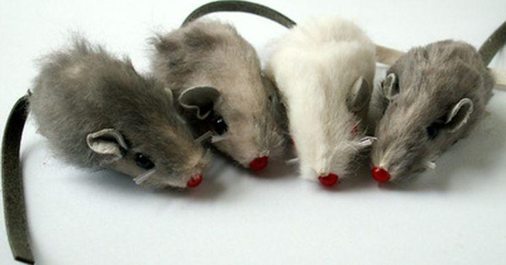 Una forma orgánica para deshacerse de los ratones. Descubrir que hay ratones u otros roedores viviendo en tu casa puede ser molesto y totalmente horrible. Los ratones portan enfermedades, destruyen los productos alimenticios que no están bien almacenados y pueden dejar deposiciones en cualquier lugar de la casa. Si quieres evitar los repelentes químicos o las trampas por las mascotas o los niños ...