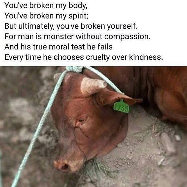 Please choose compassion over killing. Choose vegan