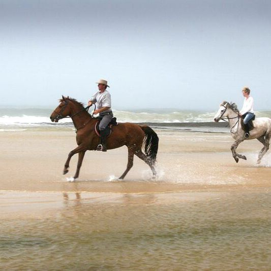 """They say """"no hour of life spent in the saddle is wasted"""" and we have to agree wholeheartedly. Did you know you can book horse riding at Sibuya as an extra activity? Go on now and spend a few thrilling hours enjoying a horse ride on the beach, there is no better way to experience South Africa's beautiful beaches. We promise.  #sibuyagamereserve #easterncape #kentononsea #southafrica #horseriding #beachlife #beach #holidayvibes #thingstodo #horses"""