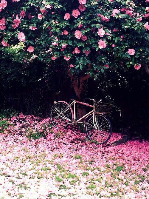 ♀♅☽ Bicycle #bloom #nature