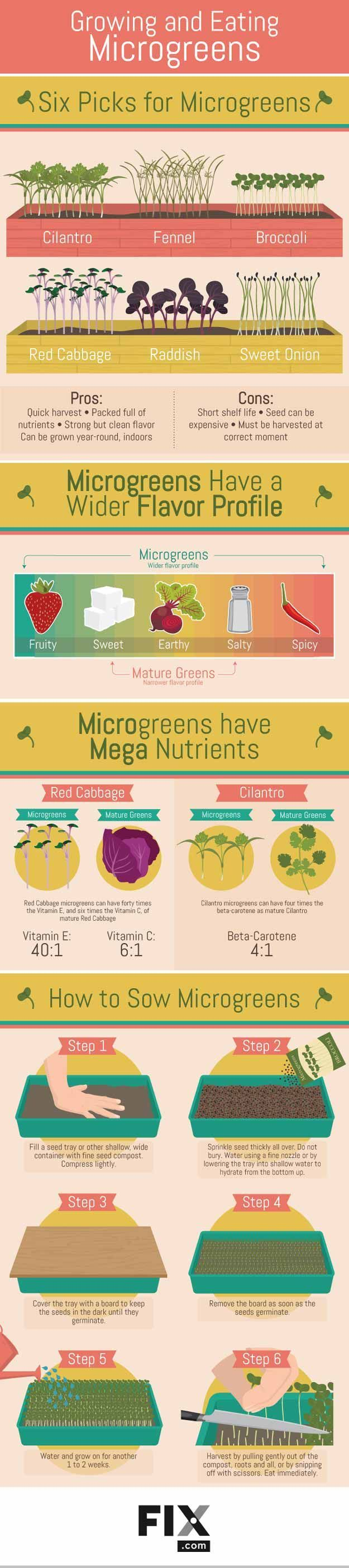 Microgreens Growing Guide For Homesteading   How To Plant And Harvest Microgreens - Gardening Tips And Ideas For Beginners And Expert Gardeners by Pioneer Settler at https://homesteading.com/need-know-microgreens/