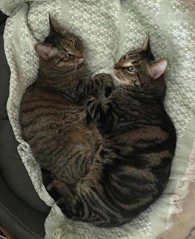 Cats Tidning Bilder