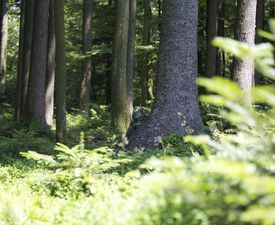 Camouflage, XJagd, Demorphing, Tarnkleidung, Tarnung, Jagdkleidung, Jagd, Jagdbekleidung, Jagdausrüstung, St. Hubertus, Jagdzeitschrift