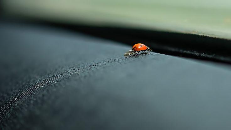 Ladybug by Ambar Elementals on 500px