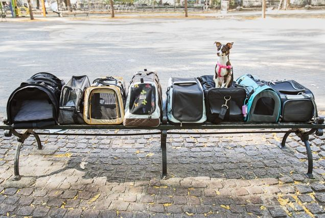 The Best Travel Carrier For Cats And Small Dogs Flying With Pets Pet Carriers Travel Carrier